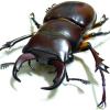Beetle guy